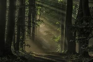Wallpaper, Sunlight, Trees, Landscape, Dark, Nature, Sunrise, Green, Morning, Mist, Sun, Rays