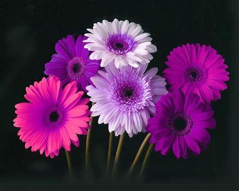 best 25 gerber daisies ideas on pinterest paper daisy