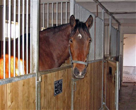 pferdepension kastanienhof zeulenroda