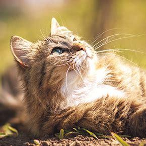 cat stroke prevent cat heat stroke in kettering