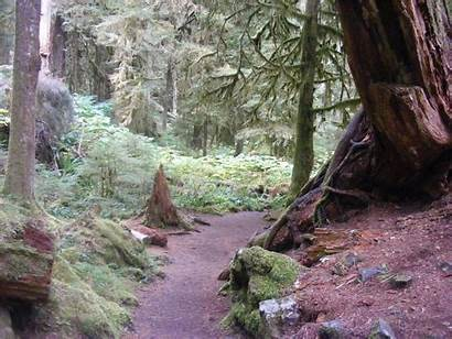 Olympic Staircase National Park Trail Rapids Bobthecamper