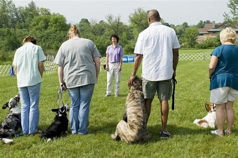 ultimate list  dog training commands obedience
