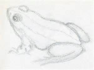 How to Draw Realistic Frogs Drawings