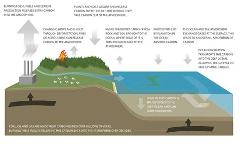 What Is A Carbon Sink Niwa