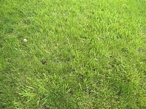Lawn Clipart   Clipart Panda - Free Clipart Images