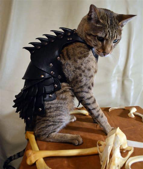 Cat Battle Armor Dudeiwantthat Com