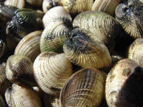 ecodiagnostics biomarkers  shellfish health  urban