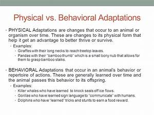 Unit 2: Adaptations Changes Over Time Adapting to ...