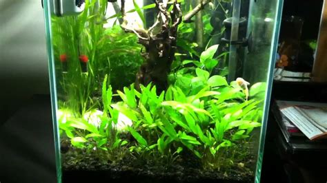 Fluval Chi Aquascape by Fluval Chi Planted Tank With Eheim Lights