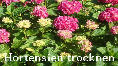 Getrocknete Blüten Deko by Hortensien Trocknen Deko Ideen Mit Flora Shop Floristik