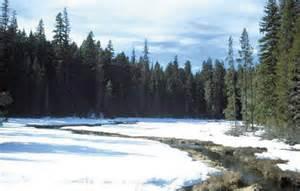 Taiga Boreal Forest Biome