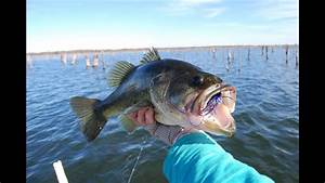 How To Catch Bass In Early Winter