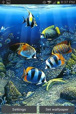 Animated Fish Wallpaper Mobile - animated fish wallpaper mobile gallery