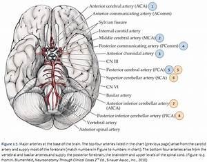 Duke Neurosciences
