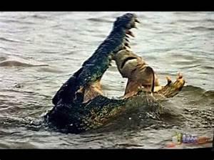 الحيوانات المفترسة - YouTube