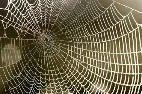 la toile d araignee bient 244 t des pansements confectionn 233 s avec de la soie de toile d araign 233 es