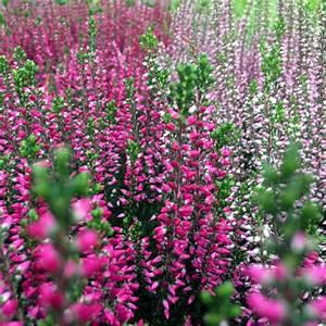 Herbstblumen Garten Winterhart : herbstblumen gartencenter blumenparadies hasselt ~ Frokenaadalensverden.com Haus und Dekorationen
