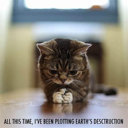 Bub Lil Destruction Planning Earth Titre Pas
