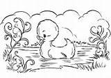 Coloring Duck Pond Disegni Animali Colorare sketch template