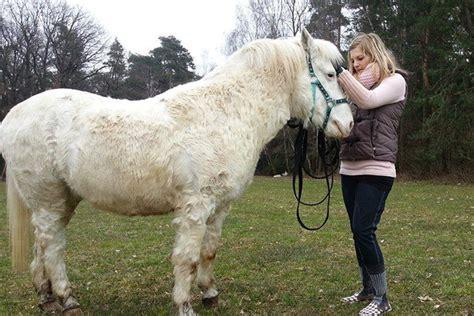 ein ponyleben mit ecs equines cushing syndrom nordfalben