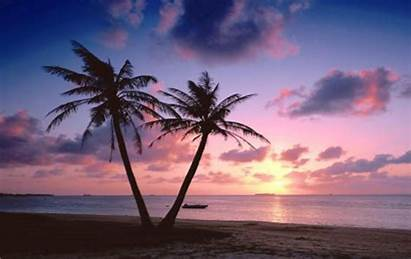 Sunset Palm Beach Landscape Tree Background Wallpapers