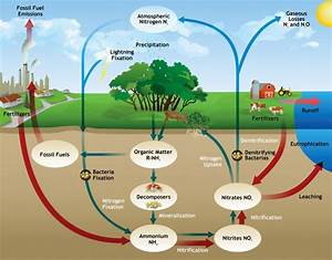 Soil ecology : The essential nutrients and horizons ...