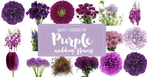 complete guide  purple wedding flowers purple flower
