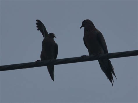 8,514 likes · 26 talking about this. 2013 birds on a wire   Birds, Bird watching, Beautiful songs