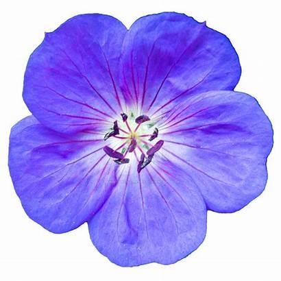 Purple Flower Flowers Camera Deviantart Bunny Plants