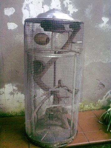 Gabbie Per Cincillà Usate - gabbia uccelli veneto usato vedi tutte i 10 prezzi