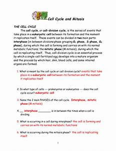34 Cell Cycle And Mitosis Worksheet Answer Key