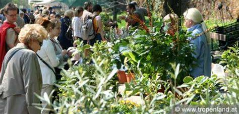 Botanischer Garten Der Universität Wien by Tropenland At Exotische Pflanzen Selbst Ziehen