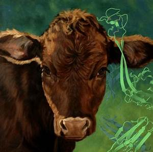Unusual antibodies in cows suggest new ways to make ...