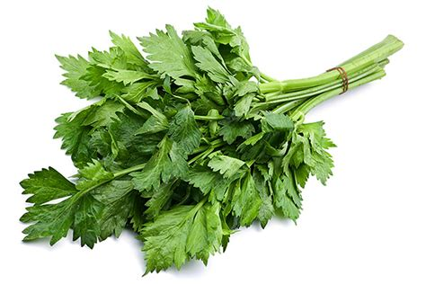 celery leaves and health herbal remedies with celery