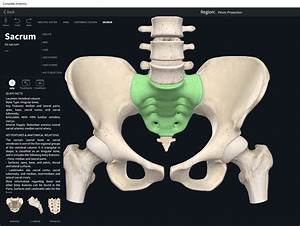 Bones  Vertebral Column  Sacrum   U2013 Anatomy  U0026 Physiology