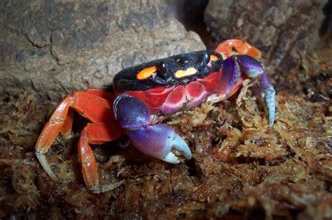 la cuisine du jardin crabe le jardin des animaux