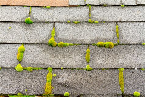 Does Moss On Your Roof Mean You Need A Roof Repair 5 V Crimp Metal Roof Leak In Red Inn Niagara Falls Ny Using Racks Louisville East Cement Shingles 5v North American Roofing Reviews