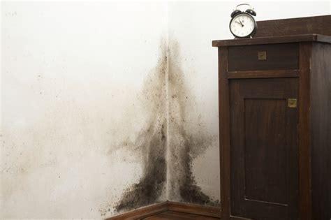 dangers  black mold  houses livestrongcom