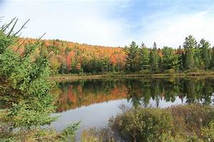 Free Images   Tree  Forest  Wilderness  Mountain  Trail  Meadow  Leaf  Lake  River  Pond