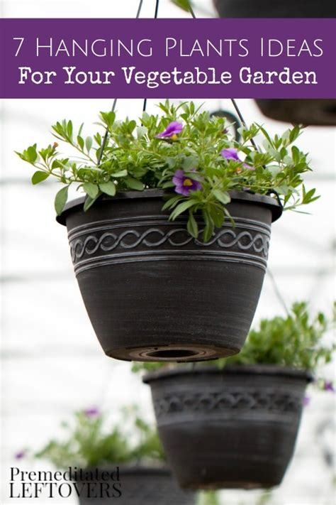 Hanging Vegetable Garden by Hanging Plant Ideas For Your Vegetable Garden