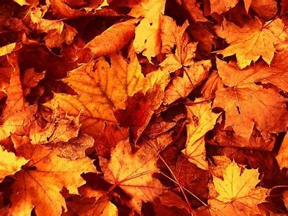 Leaves Fall Wallpapers Autumn Cool