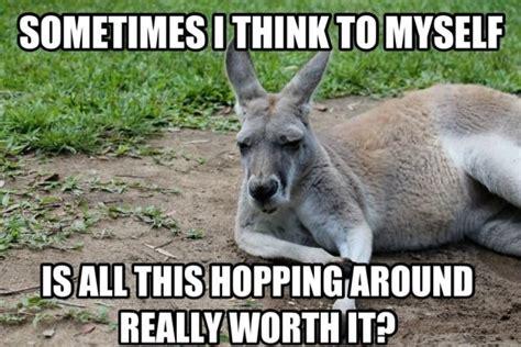 Kangaroo Meme - 11 kangaroo memes sure to make you laugh every time