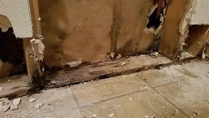 Mold Damage Water Repair