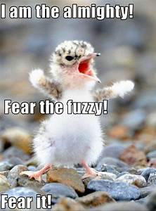 30 Funny animal captions - part 5 (30 pics) | Amazing ...