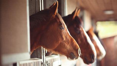 horse horses having stables smart beastiality