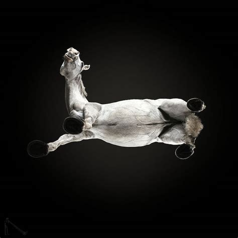 brilliant animal photography shows underbelly  horses