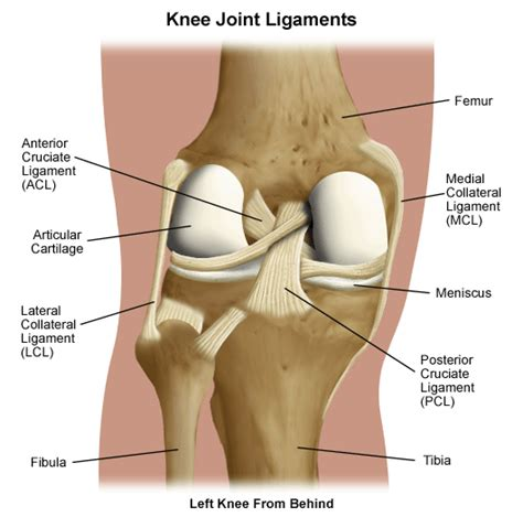 si e lcl knee osteopathy singapore
