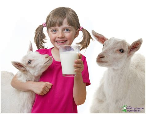 Advantages Of Cow Milk Over Goat Milk And Vice Versa