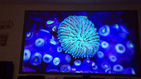 black projector projection screen az black pearl paint