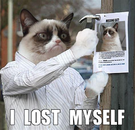 Lost Cat Meme - image gallery lost cat meme